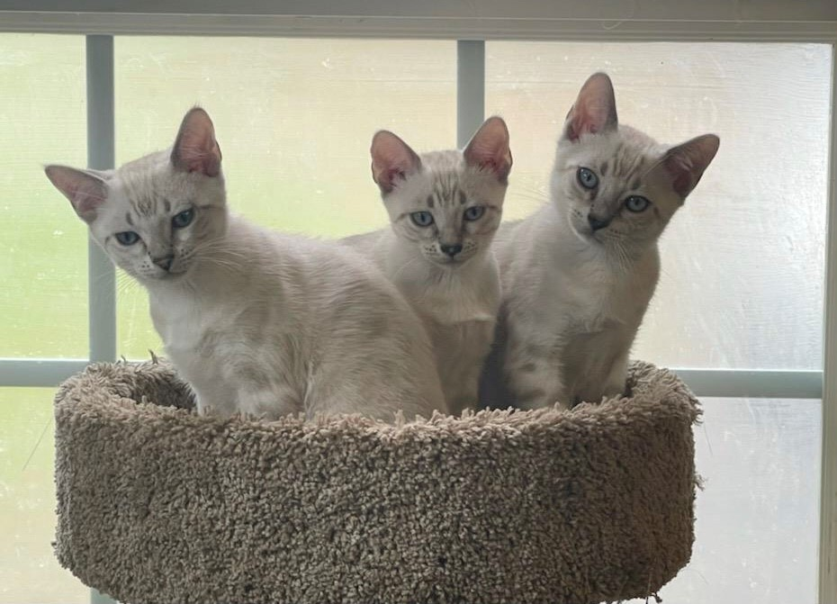 Happy cats looking inquisitive in a cat tower